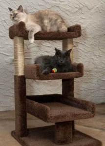 Best Cat Trees For Large Cats Sturdy Cat Trees For Large